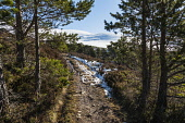Track by the Allt Ruadh, Glen Feshie Alan Gordon/Scottish Viewpoint Cairngorms,Caledonian Forest,Glen Feshie,Highlands,Munro,National Park,National Scenic Area,Nature Reserve,SSSI,Scotland,Scots Pine,atmospheric,conifer,footpath,forest,hills,hillwalking,landscape,moun