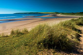 Lunan Bay, Angus, Scotland Keith Fergus/Scottish Viewpoint u.k,Great Britain,GB,G.B,Scotland,Scottish,nobody,outdoors,Angus,Lunan Bay,Visitor Attraction,Coast,Coastline,Angus Coast,East Scotland,Summer,beach,sandy,coastal