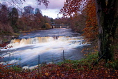 Bonnington Linn and the River Clyde, Falls of Clyde near New Lanark, South Lanarkshire Keith Fergus/Scottish Viewpoint u.k,Great Britain,GB,G.B,Scotland,Scottish,nobody,outdoors,South Lanarkshire,Corra Linn,Waterfall,River Clyde,New Lanark,Clyde Walkway,Autumn,Colours,Woodland,Historic,Historical,UNESCO World Heritage