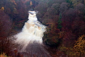 The dramatic 27 metre high Corra Linn and the River Clyde, New Lanark, South Lanarkshire Keith Fergus/Scottish Viewpoint u.k,Great Britain,GB,G.B,Scotland,Scottish,nobody,outdoors,South Lanarkshire,Corra Linn,Waterfall,River Clyde,New Lanark,Clyde Walkway,Autumn,Colours,Woodland,Viewpoint,Visitor Attraction,Historic,His