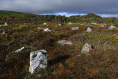 hill o'many stanes;stone row;mid-clyth;caithness;scotland Mark Hicken/Scottish Viewpoint uk,u.k,Great Britain,GB,G.B,Scotland,Scottish,nobody,daytime,outdoors,caithness,mid-clyth,hill o'many stanes,graveyard,astronomical calculator,192 flagstone slabs,22 rows,stone row monument,bronze age