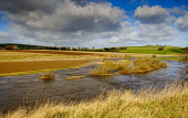 The River Clyde in flood near Thankerton, South Lanarkshire, Scotland on Wednesday 13th March 2019 Andrew Wilson /Scottish Viewpoint uk,u.k,Great Britain,GB,G.B,Scotland,Scottish,nobody,daytime,outdoors,Flood,spate,fast flowing,burst banks,River Clyde,watercourse,waterlogged,countryside,aftermath,Flooding,flooded fields,River Medwi