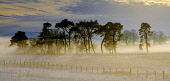 Low cloud on a cold winter's day, South Lanarkshire near Biggar Andrew Wilson/Scottish Viewpoint uk,u.k,Great Britain,GB,G.B,Scotland,Scottish,nobody,daytime,outdoors,winter,cold,frosty,low cloud,foggy scotch mist,wintery,rural,weather,winter weather,South Lanarkshire,Biggar,tree,trees,wood,woodl