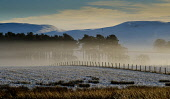 Low cloud on a cold winter's day, South Lanarkshire near Biggar Andrew Wilson/Scottish Viewpoint uk,u.k,Great Britain,GB,G.B,Scotland,Scottish,nobody,daytime,outdoors,winter,cold,frosty,low cloud,foggy scotch mist,wintery,rural,weather,winter weather,South Lanarkshire,Biggar,fields,field,tree,tre