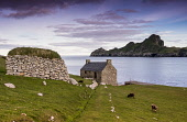 The Feather House, Hirta, St Kilda Allan Wright/Scottish Viewpoint uk,u.k,Great Britain,GB,G.B,Scotland,Scottish,nobody,daytime,outdoors,sheep,soay,atmospheric,hebridean,rugged,remote,peaceful,nostalgic,sea,shore,abandoned,clearances,nature,escapism,colony,nature res