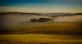 Dramatic winter landscape in South Lanarkshire, Scotland Andrew Wilson  /Scottish Viewpoint Scotland,color,colour,dramatic,fog,foggy,frosty cold,landscape,long shadows,low cloud,low sun,misty,rich colour,setting sun,sunny,sunshine,winter,winter color,winter colour,agriculture,livestock,anima