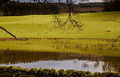 The River Tweed flooding fields after heavy rain near Broughton in the Scottish Borders Andrew Wilson  /Scottish Viewpoint Scottish Borders,flooding,flooded,flood,weather picture,flooded fields,River Tweed,Scotland,agriculture,livestock,animal,animals,graze,grazing,farm,farms,farming,countryside