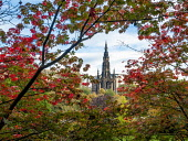 leaves and Scott Monument, Edinburgh Allan Wright  /Scottish Viewpoint united kingdom,edinburgh,scotland,lothians,capital city of scotland,auld reekie,red,colourful,graceful,pretty,maple,acer,garden,architecture,monument,shrine,park,sir walter scott,spire,historic scotla
