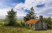 Ruined croft, Isle of Jura , Scotland Allan Wright  /Scottish Viewpoint crofting,peaceful,remote,solitude,hebridean,rugged,blue,orange,trees,grasses,fields,hillside,island,mountains,rough pasture,abandoned,clearances,nostalgic,ruins,subsistance,traditional,rusty,cottages,