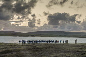 Pagan Gathering at Summer Solstice, Ring of Brodgar, Orkney. Allan Wright /Scottish Viewpoint Bog Cotton,STONE CIRCLE,brodgar,ceremony,coast,island,isle,northern isles,orkney,pagan,ring of,ring of brodgar neolithic standing stones,scotland,scottish,sea,solstice,standing,stones,sunsrise,islands