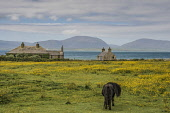View to Hoy from South Ronaldsay, Orkney Allan Wright /Scottish Viewpoint coast,cottages,farming,hoy,orkney,scotland,scottish,sea,shetland pony. buttercups,coastal,coastline,water,island,islands,isle,isles,cottage,housing,house,houses