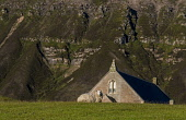 Sheep and Kirk, Church Gable end, Ward Hill, Hoy Allan Wright /Scottish Viewpoint church,coast,hoy,orkney,scotland,scottish,sheep  kirk,ward hill,island,islands,isle,isles