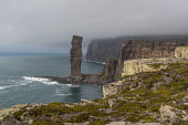 Cliffs by Old man of Hoy, orkney Allan Wright /Scottish Viewpoint hoy,orkney,scotland,scottish,coast,coastal,coastline,water,sea,island,islands,isle,isles,cliff,cliffs,old,man,stack