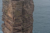 Climber on the  Old man of Hoy, orkney Allan Wright /Scottish Viewpoint hoy,orkney,scotland,scottish,coast,coastal,coastline,water,sea,island,islands,isle,isles,cliff,cliffs,old,man,stack,climbing,climber,person