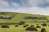 Farming on Mainland Orkney Allan Wright /Scottish Viewpoint agriculture,arable,field,fields,crop,crops,farm,farms,farming,countryside,tractor,orkney,cows,catlle