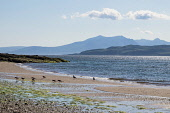 West Coast beach on Great Cumbrae looking to Arran Allan Wright  /Scottish Viewpoint blue sky,bright,pretty,peaceful,sunset,summer,tranquil,blue,colourful,bay,sea,oyster catchers,firth of clyde,ayrshire,great cumbrae,coast,coastal,coastline,water,island,islands,isle,isles