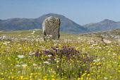 Horgabost, Harris, Mcleod's Standing stone Allan Wright  /Scottish Viewpoint outer hebrides,harris,tarbert,western isles,enchanting,pretty,blue sky,anticyclone,bright,dry,summer,sunny,clover,buttercups,machair,cowslip,blossom,grasses,colourful,yellow,mountains,moorland,ancient