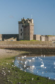 Broughty Ferry Castle Allan Wright /Scottish Viewpoint United Kingdom,scotland,angus,dundee,urban,river tay,tay estuary,broughty ferry castle,castle,swans,mute swan