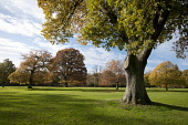 Camperdown park, Dundee Allan Wright /Scottish Viewpoint angus scotland allan wright landscape tayside dundee east coast scottish image photograph stock trees camperdown park autumn