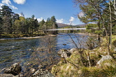 Looking west along River Dee near Braemar, white chain bridge, spring sunlight, Aberdeenshire, Dennis Barnes /Scottish Viewpoint River,Dee,near,Braemar,A93,sunlight,white,chain,bridge,Grampians,Cairngorms,national,park,Aberdeenshire,Royal,Deeside,Balmoral,wild,remote,mountains,landscape,Scottish,UK,United Kingdom,nobody