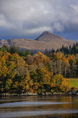 Ben Cruachan and Achnacloich, Loch Etive, Argyll Tony Hardley /Scottish Viewpoint scotland,loch etive,cruachan,ben cruachan,argyll,autumn,fall,landscape,autumn colours,scottish landscape,nobody,outdoors,water,mountain,mountains,hill,hills