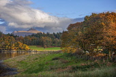 Autumn view of Ben Cruachan and Achnacloich, Loch Etive, Argyll Tony Hardley /Scottish Viewpoint scotland,loch etive,argyll,ben cruachan,landscape,achnacloich,fall,autumn,mountains,hills,cruachan,mountain,hill,nobody,outdoors,water