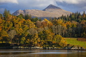 Ben Cruachan and Achnacloich, Loch Etive, Argyll Tony Hardley /Scottish Viewpoint scotland,loch etive,cruachan,ben cruachan,argyll,autumn,fall,landscape,autumn colours,scottish landscapenobody,outdoors,water,mountain,mountains,hill,hills