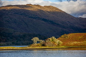 Autumn light over Loch Etive, Argyll Tony Hardley /Scottish Viewpoint scotland,loch etive,argyll,landscape,hills,mountains,scotttish highlands,fall,autumn,scottish highlands,nobody,outdoors,water