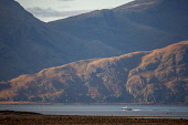 Telephoto view of the Morvern Hills from Posrt Appin, Argyll Tony Hardley /Scottish Viewpoint scotland,morvern hills,loch linnhe,autumn,evening light,west highlands,scottish highlands,mountains,hills,fall,boat,nobody,outdoors,water