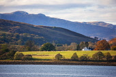 Telephoto view towards South Shian, Loch Creran, Argyll Tony Hardley /Scottish Viewpoint scotland,fall,autumn,landscape,south shian,scottish highlands,loch creran,mountains,hills,argyll autumn,scotland autumn,west coast scotland,sheep,fields,nobody,outdoors,water