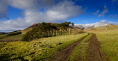 Winter landscape in the Scottish Borders near the small village of Broughton. Andrew Wilson /Scottish Viewpoint landscape,snow covering,hills,southern uplands,farm track,wonter,February,farming land,agricultural land,tree belt,snow,track,path,mountain,mountains,hill