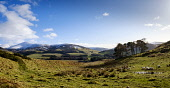 Winter landscape in the Scottish Borders near the small village of Broughton. Andrew Wilson /Scottish Viewpoint landscape,snow covering,hills,southern uplands,farm track,winter,February,farming land,agricultural land,tree belt,picturesque,sheep,mountain,mountains,hill,snow