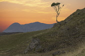 Lone tree on a hillside in Torridon, Highlands Bill McKenzie/Scottish Viewpoint tree,trees,highland,highlands,mountain,mountains,hill,hills,silhouette,silhouetted