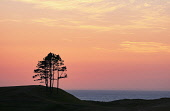 Sea view from Gairloch, Bill McKenzie/Scottish Viewpoint coast,coastal,coastline,water,sea,mountain,mountains,hill,hills,distance,nobody,sunset,tree,trees,warm,colour,silhouette,silhouetted