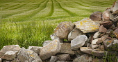 View of field of crops and stones in Caithness, Highlands Bill McKenzie/Scottish Viewpoint agriculture,arable,field,fields,crop,crops,farm,farms,farming,countryside,stone,stones,texture,slab,slabs