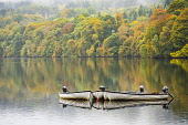 Autumn colours on trees and rowing boats on Loch Faskally in Pitlochry, Perthshire , Scotland, Uk Iain Masterton /Scottish Viewpoint Loch Faskally scotland,scottish,pitlochry scotland in autumn,autumn in scotland,perth and kinross,Autumn,autumnal,autumn colours,trees,trees in autumn,hermitage,natural world,scenic,landscape,travel,t