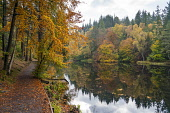 Autumn colours on woodland foliage at Loch Dunmore in Faskally Wood near Pitlochry in Perthshire, Scotland,UK Iain Masterton /Scottish Viewpoint scotland,scottish,autumn,loch dunmore in autumn,loch dunmore perthshire,loch dunmore scotland,Perthshire,perth and kinross,uk,United Kingdom,Britain,british,autumnal,colours,landscape,woodland,fall co