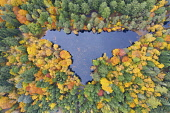 Aerial view of autumn colours of woodland at Loch Dunmore in Faskally Wood near Pitlochry in Perthshire. Iain Masterton /Scottish Viewpoint scotland,scottish,autumn,loch dunmore in autumn,loch dunmore perthshire,loch dunmore scotland,Perthshire,perth and kinross,uk,United Kingdom,Britain,british,aerial,looking down,drone image,autumnal,co