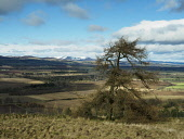 Over looking the valley of Strathmore, Angus Allan Coutts  /Scottish Viewpoint hillside,hill,green,trees,valley,vale,evening,dusk,hills,forfar,brechin,fields,angus,moutains,snow
